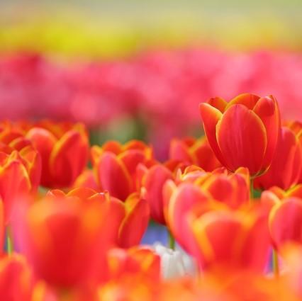 四季折々の花が咲き誇るハウステンボスへ。トラベルカウンターからのご案内
